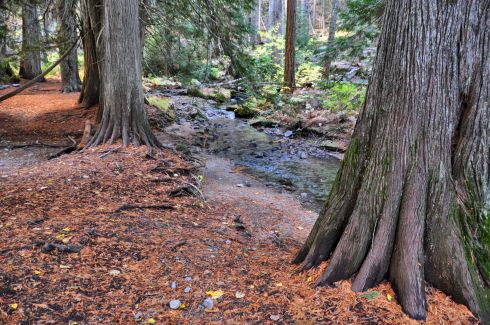 Cedar trees reach their fingers out to soak up a bit of Snow Creek.