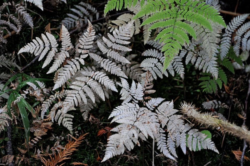 These bleached white ferns caught my eye.