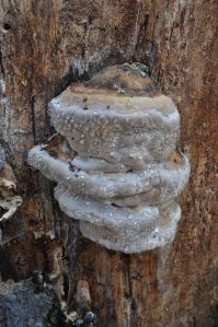 A bracket fungus captured my attention while I was resting.