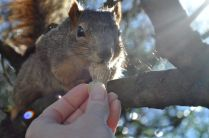 I fed my backyard squirrels from my hand.