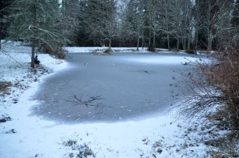 The pond froze over, so the wild ducks went off to find a more accommodating home.