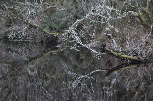 Branches stretch across a swampy bay.
