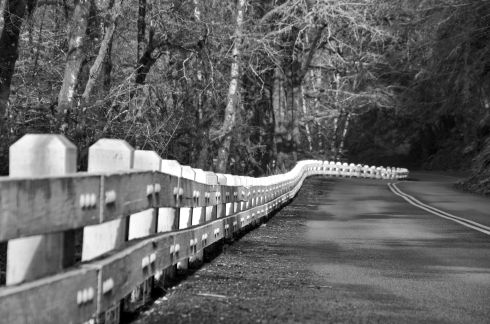 My blogger friend LB takes a lot of B&W photos. So when I saw this fence along the highway, I instantly thought of her.