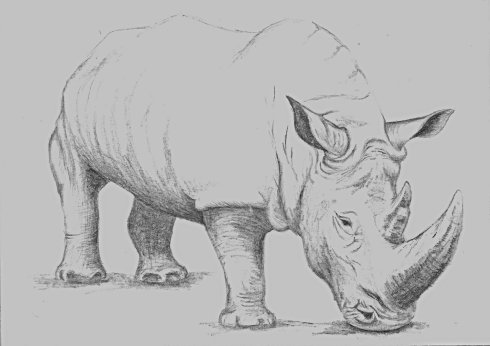 I sketched this rhino as part of a scholarship lottery for Tara. We didn't win, but we had a ton of fun drawing endangered species.