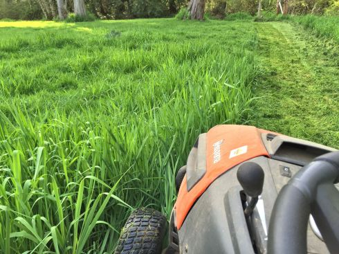 The grass grows fast in the Spring and it was like mowing a jungle.