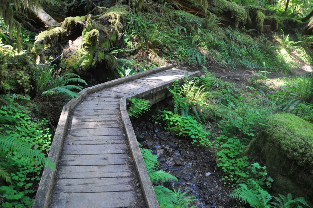 Trail between House Rock and House Rock Falls.