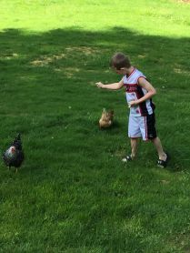 My best friend's son feeding chickens.