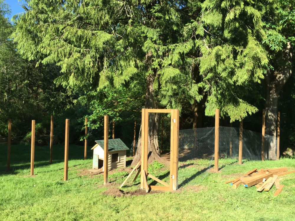 Hen fence under construction.