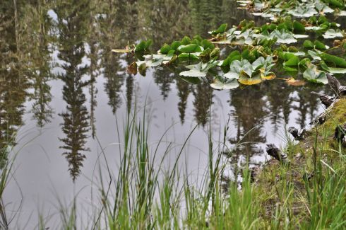 Reflections in a tiny pond near the trailhead.