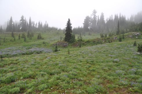 Foggy blue and green meadow.