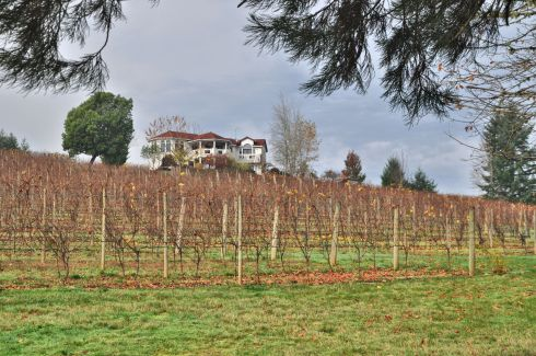 Big house on a hill. The vines have lost their leaves this late in the season.