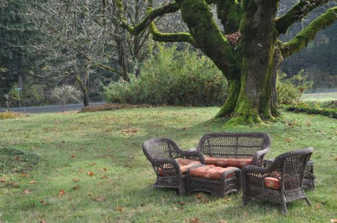 Inviting wicker furniture beneath a mostly leafless maple.