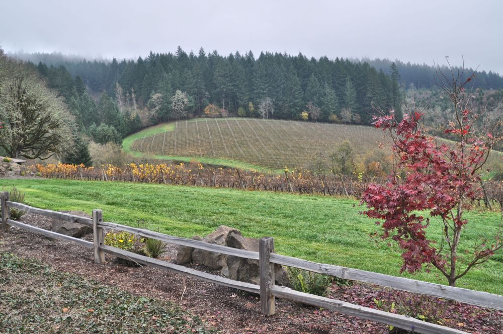 The view from the parking lot at Shafer Vineyard Cellars.