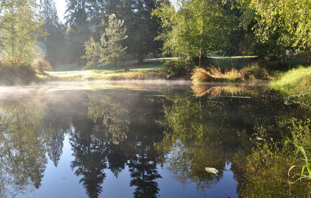 Autumn sun heats the surface of my pond.