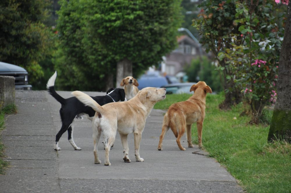 At noon the fire siren went off - a common thing I've seen in US cities - and four previously quiet stray dogs jumped to their feet and joined in song.