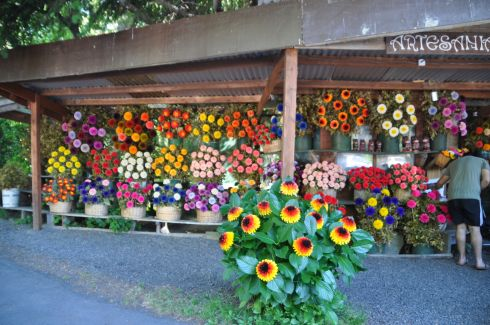 There are a couple of flower stands in Pucón that sell these astounding, huge bouquets of flowers that are painted to look out of this world.