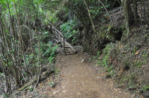 The trail included many little wooden structures to help us out, like bridges and ramps.