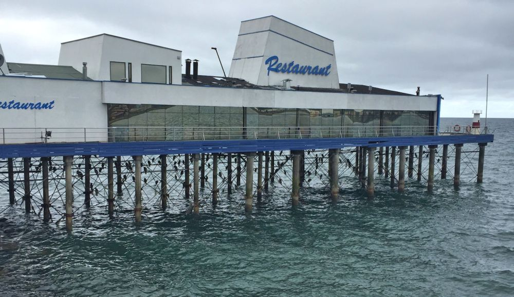 Birds roost on the pilings beneath a restaurant on the water.