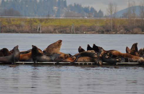 Sea lions heaped upon the docks, ranging from hound-sized to bear-sized.