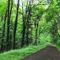 Forest Park flora